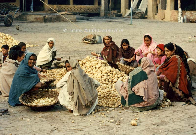 Ladies preparing langar at Beas